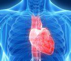 Сердечный выброс: калькулятор расчета