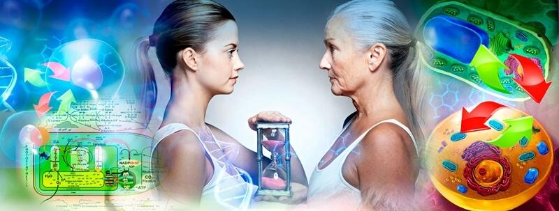 метаболический возраст человека